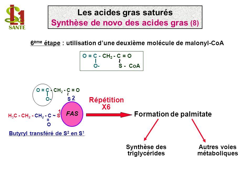 6 ème étape : utilisation dune deuxième molécule de malonyl-CoA Formation de palmitate Répétition X6 Synthèse des triglycérides Autres voies métaboliq