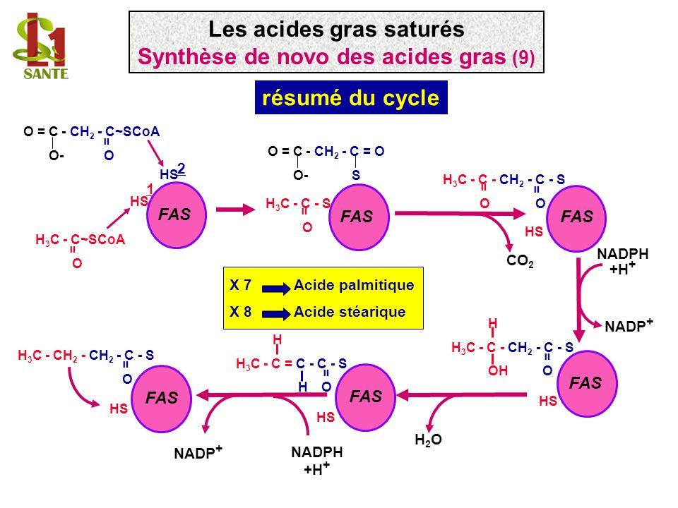 HS H H 3 C - C - CH 2 - C - S OH O = HS H H 3 C - C = C - C - S H O = HS FAS H 3 C - C - CH 2 - C - S O = = HS FAS NADPH +H + NADP + H2OH2O H 3 C - CH