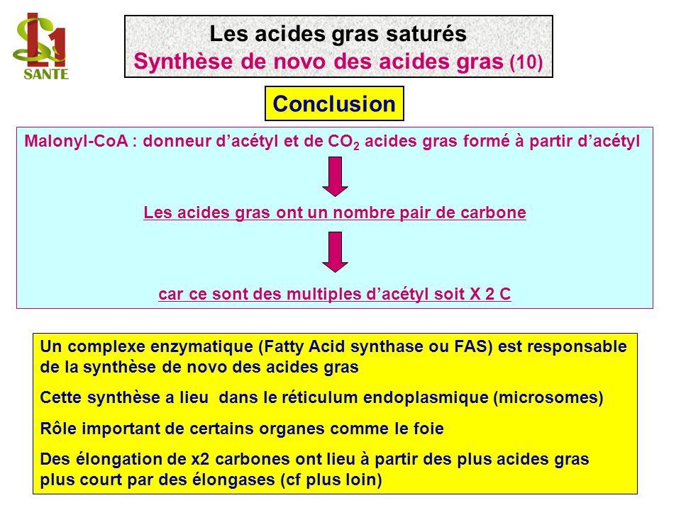 Un complexe enzymatique (Fatty Acid synthase ou FAS) est responsable de la synthèse de novo des acides gras Cette synthèse a lieu dans le réticulum en