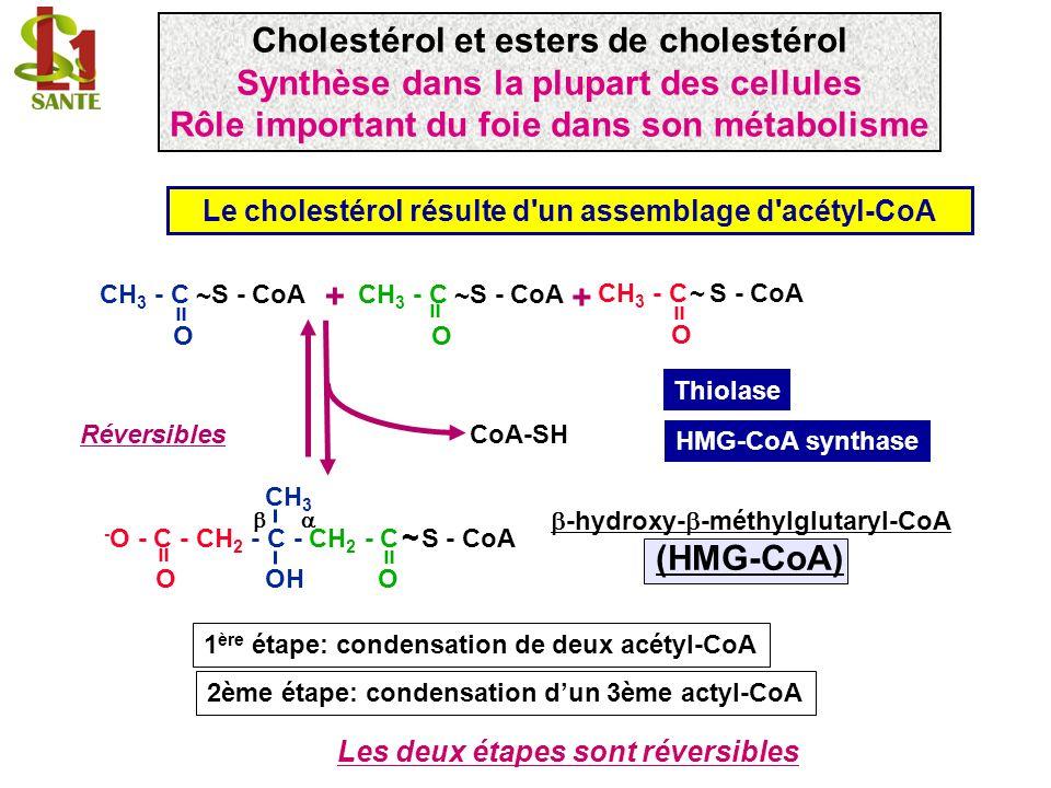 CoA-SH 2 NADP + 2 NADPH + 2H + CH 3 - O - C - CH 2 - C - CH 2 - CH 2 O OH OH = HMG-CoA réductase Mévalonate Formation de mévalonate : l HMG-CoA réductase est une cible pharmacologique Car cette étape est irréversible hypocholestérolémiant (statines) Irréversible CH 3 - O - C - CH 2 - C - CH 2 - C S - CoA O OH O ~ = = -hydroxy- -méthylglutaryl-CoA (HMG-CoA) Cholestérol et esters de cholestérol Le cholestérol résulte d un assemblage d acétyl-CoA