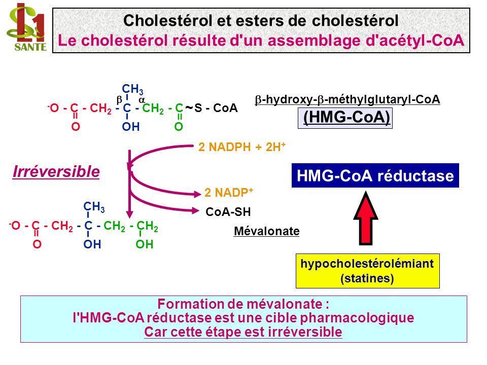 CoA-SH 2 NADP + 2 NADPH + 2H + CH 3 - O - C - CH 2 - C - CH 2 - CH 2 O OH OH = HMG-CoA réductase Mévalonate Formation de mévalonate : l'HMG-CoA réduct
