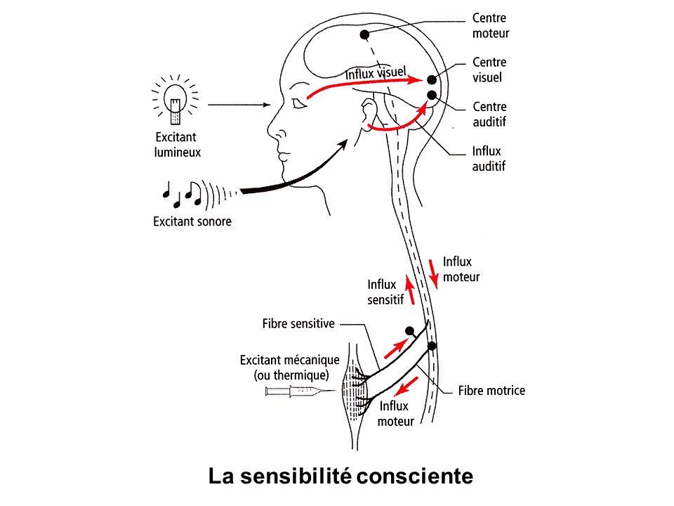 La sensibilité consciente