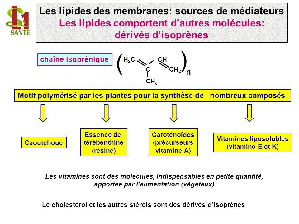 chaîne isoprénique ( H 2 C CH C CH 2 CH 3 ( n Le cholestérol et les autres stérols sont des dérivés disoprènes Les lipides des membranes: sources de m