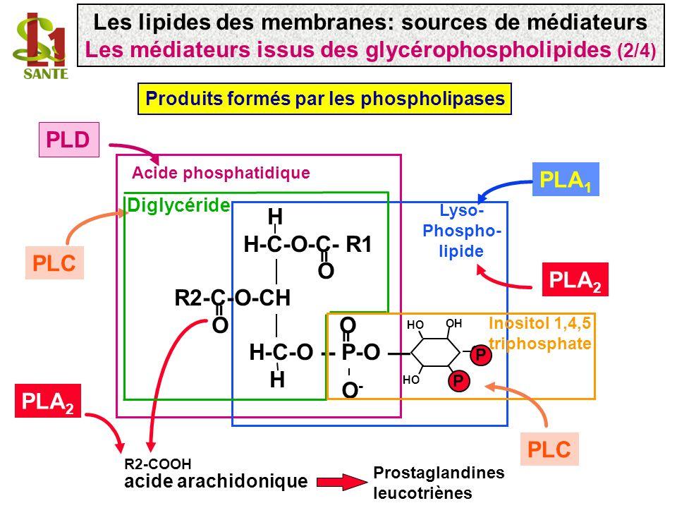 Exemple des dérivés de lacide arachidonique COOH acide arachidonique C20 :4 ( 5, 8, 11, 14) 5 8 11 20 Phospholipides membranaires Phospholipases A 2 - Certaines phospholipases A 2 reconnaissent spécifiquement lacide arachidonique - Hydrolyse de la liaison ester en position 2 du glycérol (ne nécessite pas dénergie) Les lipides des membranes: sources de médiateurs Les médiateurs issus des glycérophospholipides (3/4)