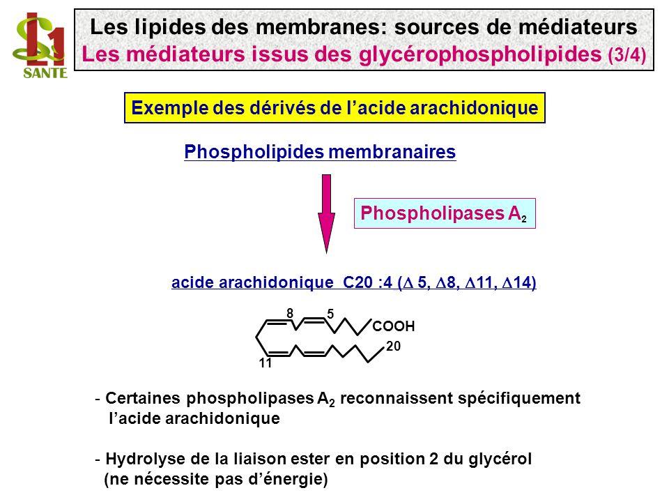 Exemple des dérivés de lacide arachidonique COOH acide arachidonique C20 :4 ( 5, 8, 11, 14) 5 8 11 20 Phospholipides membranaires Phospholipases A 2 -
