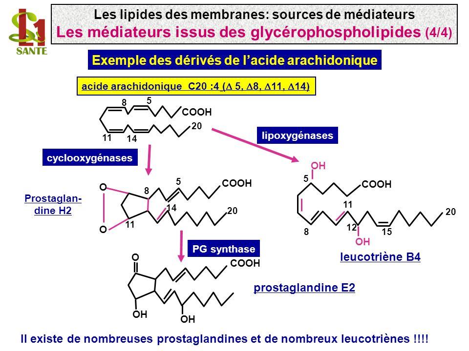 cyclooxygénases lipoxygénases COOH acide arachidonique C20 :4 ( 5, 8, 11, 14) O OH COOH prostaglandine E2 PG synthase 5 8 11 14 20 COOH O O 5 8 11 14