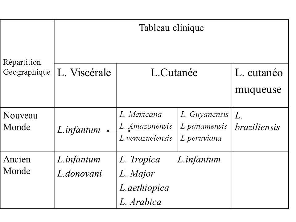 Répartition Géographique Tableau clinique L. ViscéraleL.CutanéeL. cutanéo muqueuse Nouveau Monde L.infantum L. Mexicana L. Amazonensis L.venazuelensis