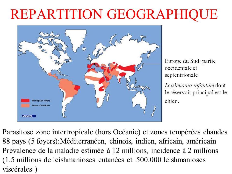 REPARTITION GEOGRAPHIQUE Parasitose zone intertropicale (hors Océanie) et zones tempérées chaudes 88 pays (5 foyers):Méditerranéen, chinois, indien, africain, américain Prévalence de la maladie estimée à 12 millions, incidence à 2 millions (1.5 millions de leishmanioses cutanées et 500.000 leishmanioses viscérales ) Europe du Sud: partie occidentale et septentrionale Leishmania infantum dont le réservoir principal est le chien.