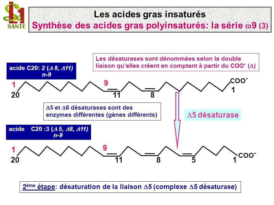 COO - 1 1120 1 9 8 COO - 11120 1 9 85 acide C20 :3 ( 5, 8, 11) n-9 acide C20: 2 ( 8, 11) n-9 2 ème étape: désaturation de la liaison 5 (complexe 5 dés