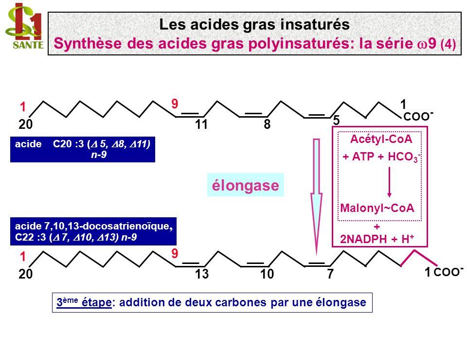 COO - 1 1120 1 9 8 5 COO - 1 1320 1 9 107 acide 7,10,13-docosatrienoïque, C22 :3 ( 7, 10, 13) n-9 élongase 3 ème étape: addition de deux carbones par