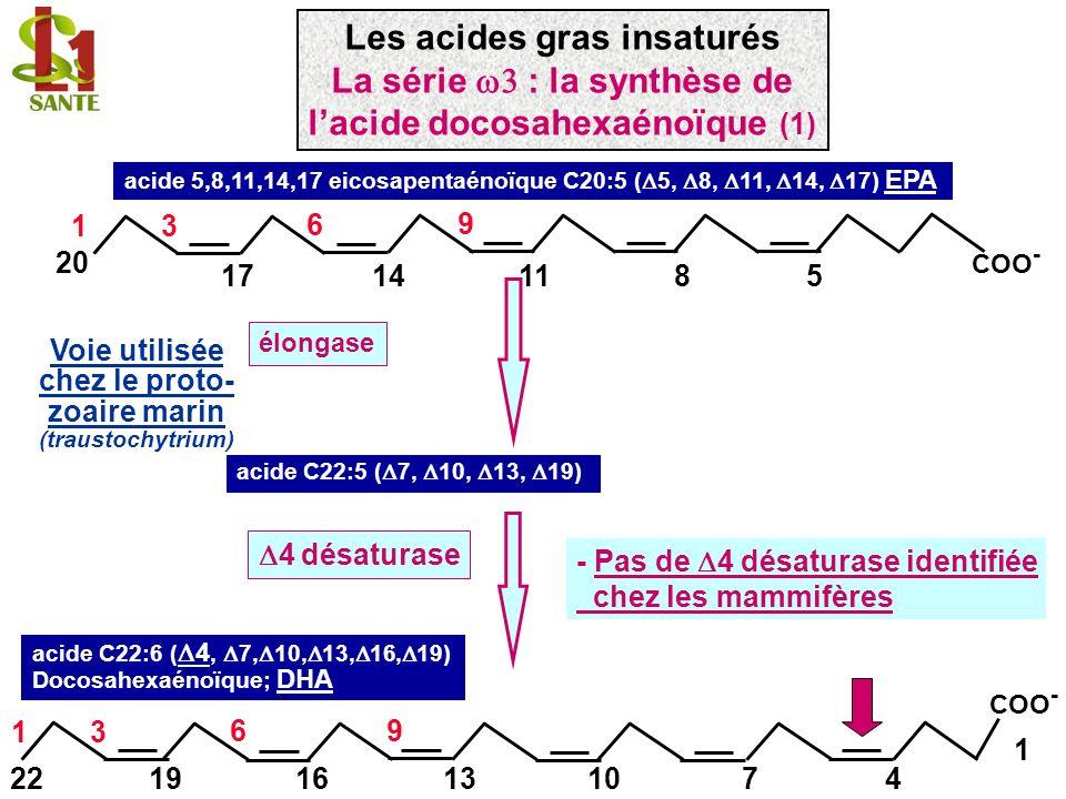 acide 5,8,11,14,17 eicosapentaénoïque C20:5 ( 5, 8, 11, 14, 17) EPA 11148 9 6 5 13 20 17 COO - élongase acide C22:5 ( 7, 10, 13, 19) Voie utilisée che