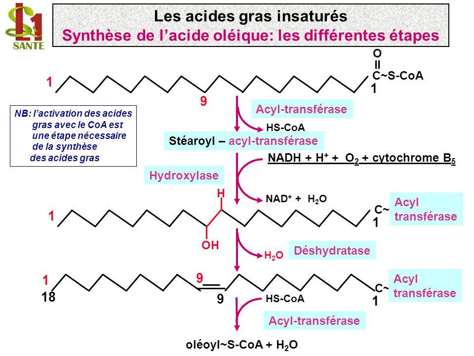 C~S-CoA 1 1 O = 9 Acyl-transférase Stéaroyl – acyl-transférase HS-CoA C~C~ 1 1 OH NAD + + H 2 O NADH + H + + O 2 + cytochrome B 5 Acyl transférase Hyd