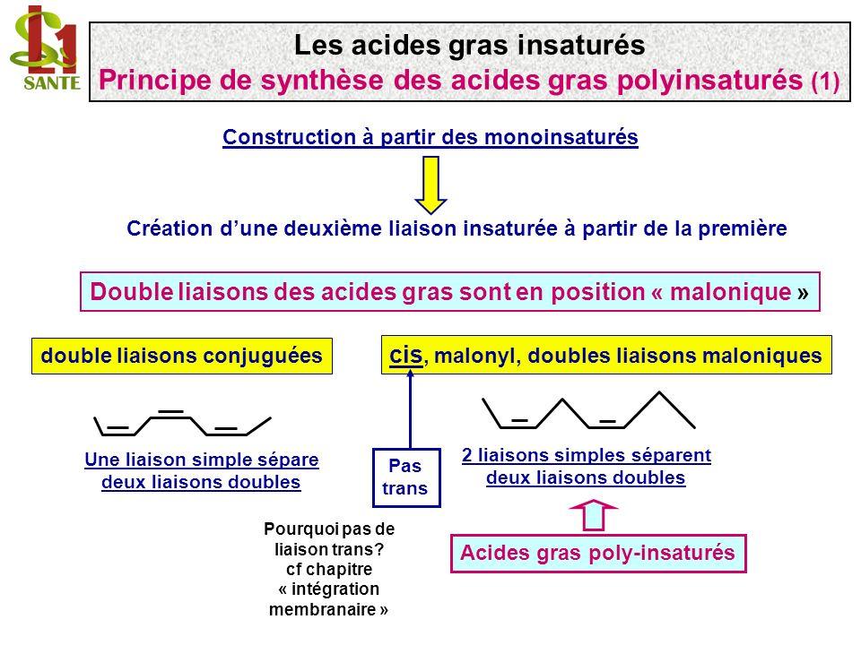 Construction à partir des monoinsaturés Création dune deuxième liaison insaturée à partir de la première Double liaisons des acides gras sont en posit