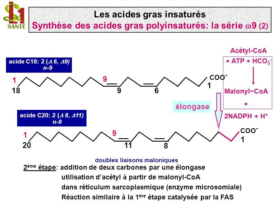 COO - 1 918 1 9 6 acide C18: 2 ( 6, 9) n-9 doubles liaisons maloniques COO - 1 1120 1 9 8 acide C20: 2 ( 8, 11) n-9 élongase 2 ème étape: addition de
