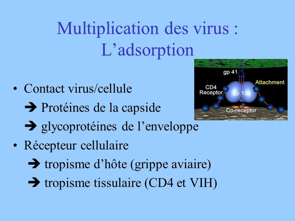 Multiplication des virus : Ladsorption Contact virus/cellule Protéines de la capside glycoprotéines de lenveloppe Récepteur cellulaire tropisme dhôte