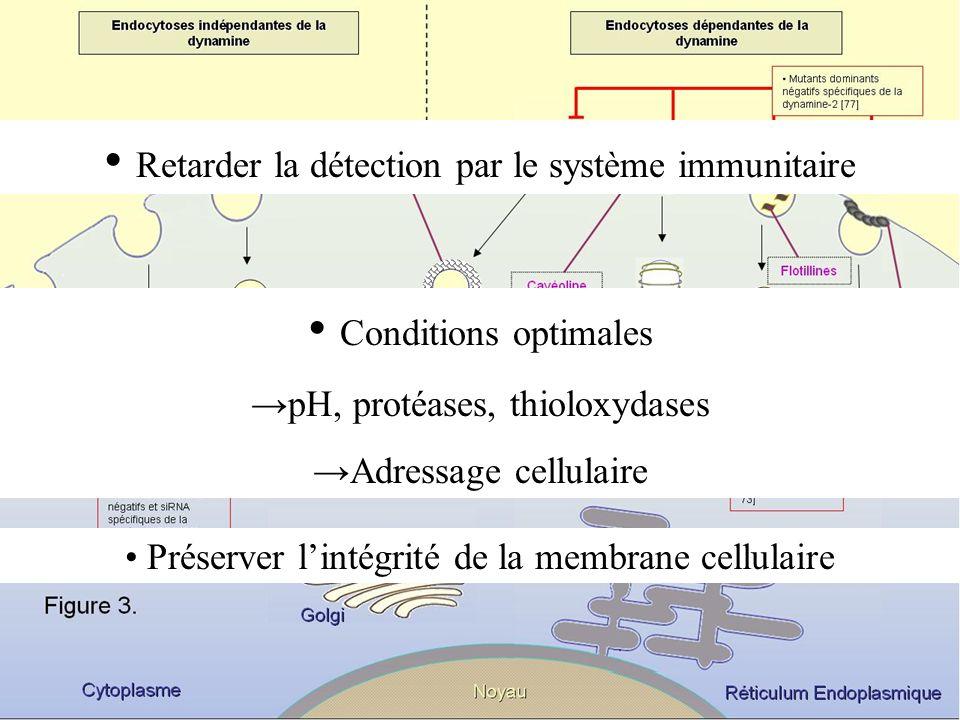Retarder la détection par le système immunitaire Conditions optimales pH, protéases, thioloxydases Adressage cellulaire Préserver lintégrité de la mem