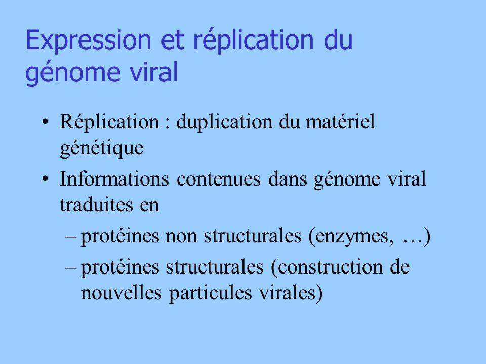 Expression et réplication du génome viral Réplication : duplication du matériel génétique Informations contenues dans génome viral traduites en –proté