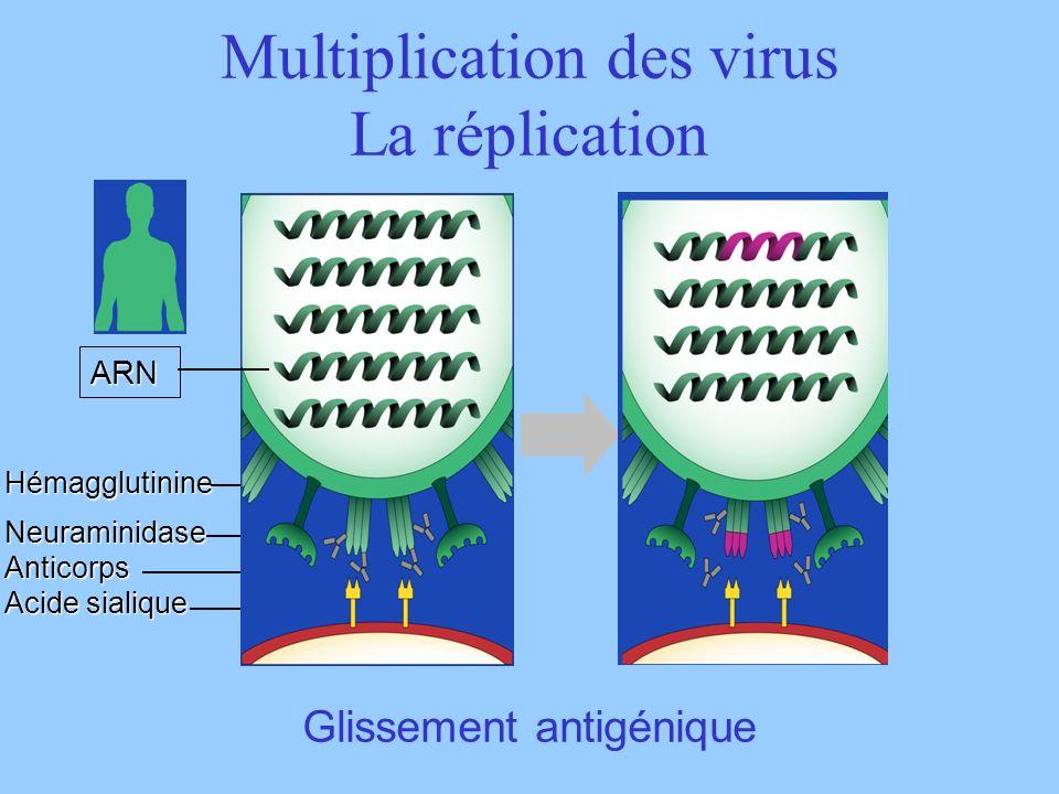 ARN HémagglutinineNeuraminidaseAnticorps Acide sialique Glissement antigénique Multiplication des virus La réplication