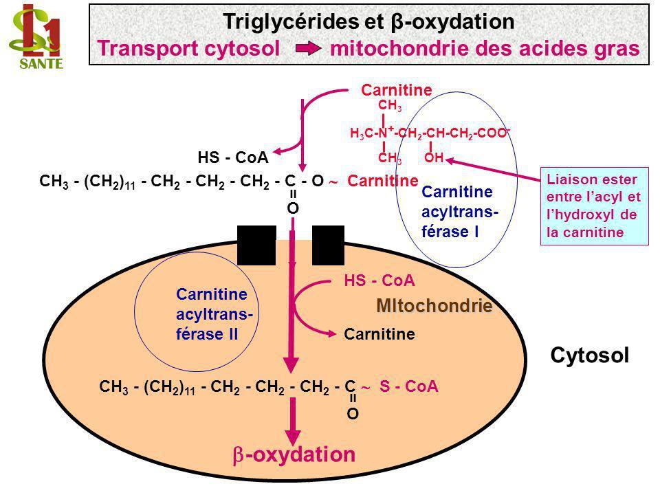 HS - CoA Carnitine CH 3 - (CH 2 ) 11 - CH 2 - CH 2 - CH 2 - C - O Carnitine O = CH 3 H 3 C-N + -CH 2 -CH-CH 2 -COO - CH 3 OH Carnitine acyltrans- féra