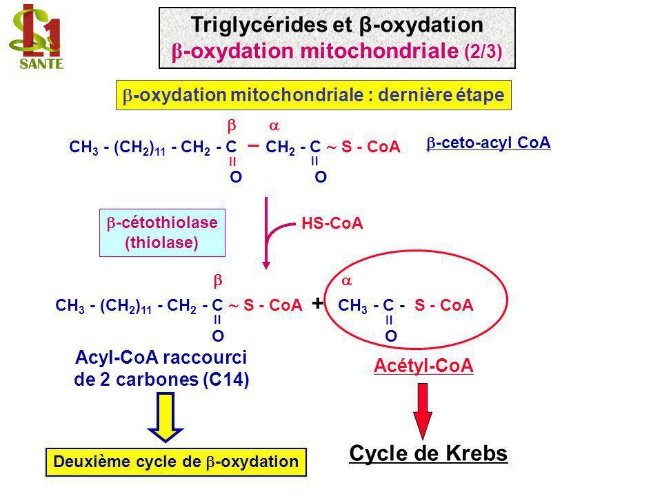 -ceto-acyl CoA CH 3 - (CH 2 ) 11 - CH 2 - C S - CoA + CH 3 - C - S - CoA O -cétothiolase (thiolase) Acétyl-CoA -oxydation mitochondriale : dernière ét