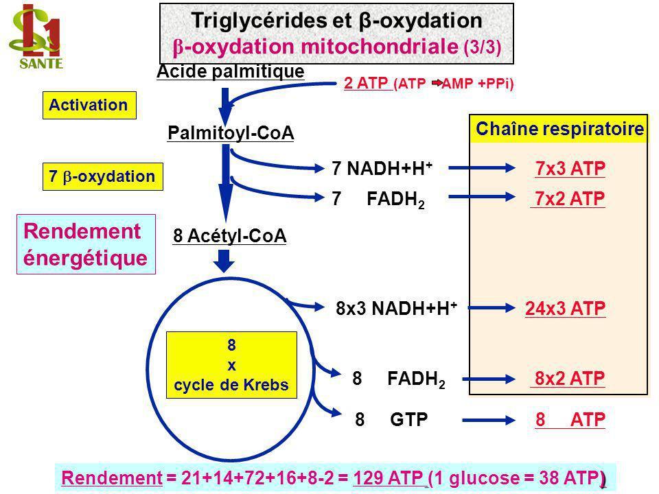 Chaîne respiratoire 7x3 ATP Rendement énergétique Acide palmitique Palmitoyl-CoA Activation 8x3 NADH+H + 8 FADH 2 8 GTP 8 x cycle de Krebs 2 ATP (ATP