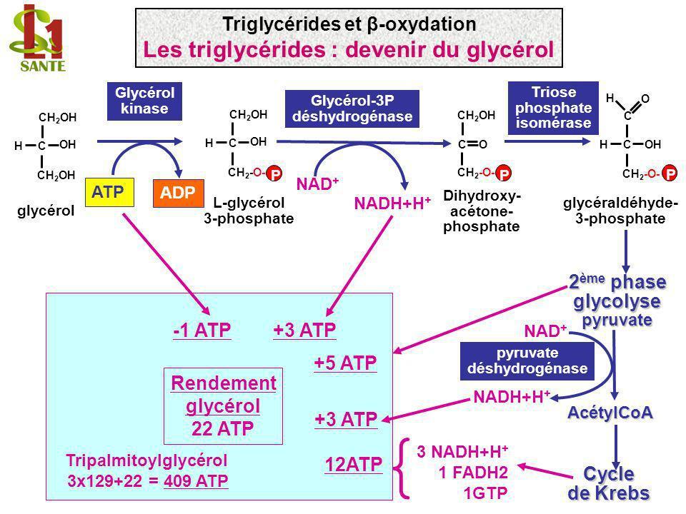 -1 ATP C OH H CH 2 OH glycérol P C OH H CH 2 -O- CH 2 OH ATP ADP L-glycérol 3-phosphate glycéraldéhyde- 3-phosphate COHH CH 2 -O- C H O P Triose phosp