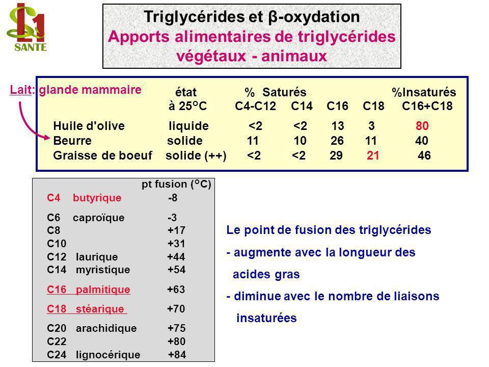 Oxalo- Acétate Succinate Fumarate malate NAD+ NADH + H + H2OH2O Cycle de Krebs FAD FADH 2 NAD+ NADH + H + -ceto-acyl CoA L-3-Hydroxyacyl déshydrogénase CH 3 - (CH 2 ) 11 - CH 2 - C CH 2 - C S - CoA O O = = H2OH2O Enoyl CoA hydratase (crotonase) L- -hydroxyacyl CoA CH 3 - (CH 2 ) 11 - CH 2 - CH CH 2 - C S - CoA OH O = FAD FADH 2 Acyl CoA déshydrogénase Acyl CoA (palmitoyl CoA) trans 2 Enoyl CoA CH 3 - (CH 2 ) 11 - CH 2 - CH 2 CH 2 - C S - CoA O = CH 3 - (CH 2 ) 11 - CH 2 - CH CH - C S - CoA O = Triglycérides et β-oxydation β -oxydation mitochondriale (1/3)