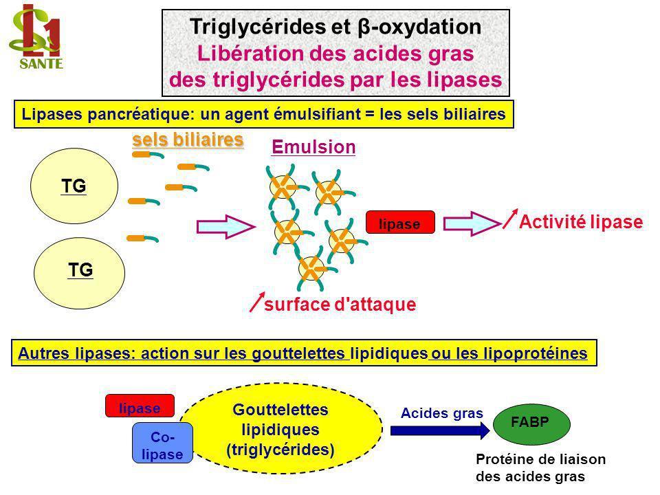 Lipases pancréatique: un agent émulsifiant = les sels biliaires TG sels biliaires Autres lipases: action sur les gouttelettes lipidiques ou les lipopr