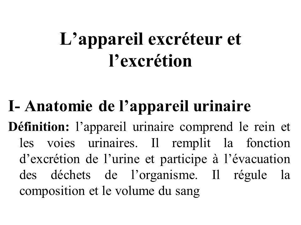 Lappareil excréteur et lexcrétion I- Anatomie de lappareil urinaire Définition: lappareil urinaire comprend le rein et les voies urinaires.