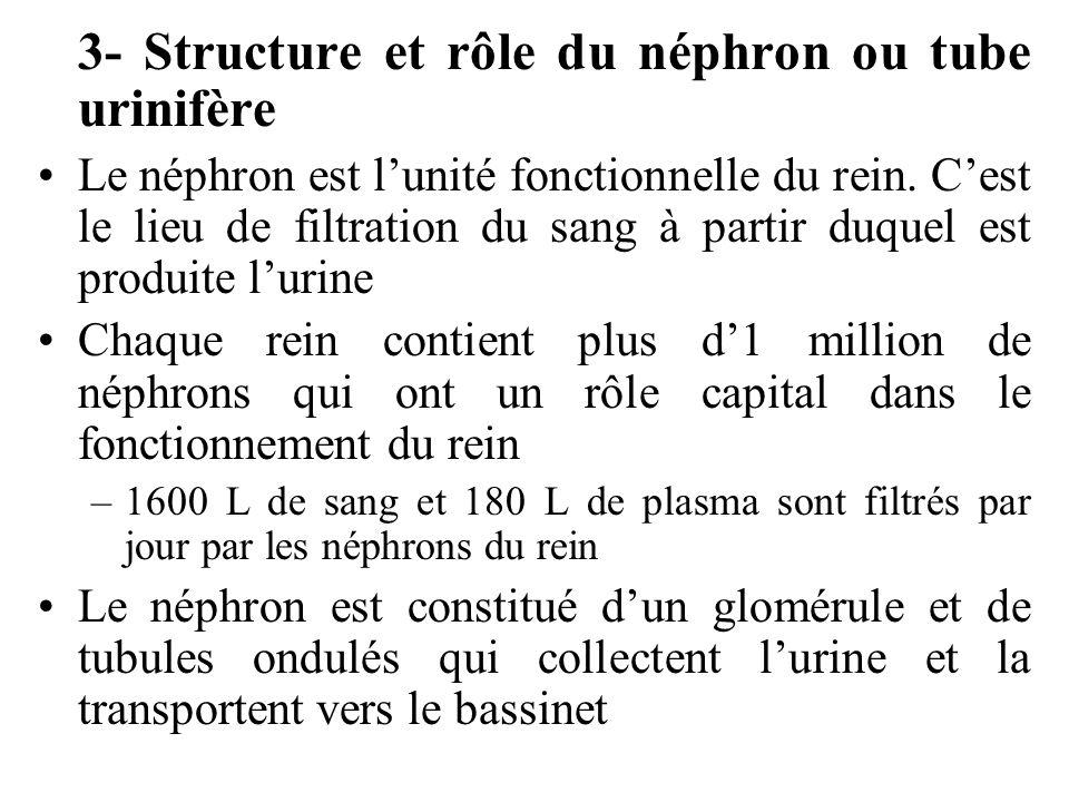 3- Structure et rôle du néphron ou tube urinifère Le néphron est lunité fonctionnelle du rein.