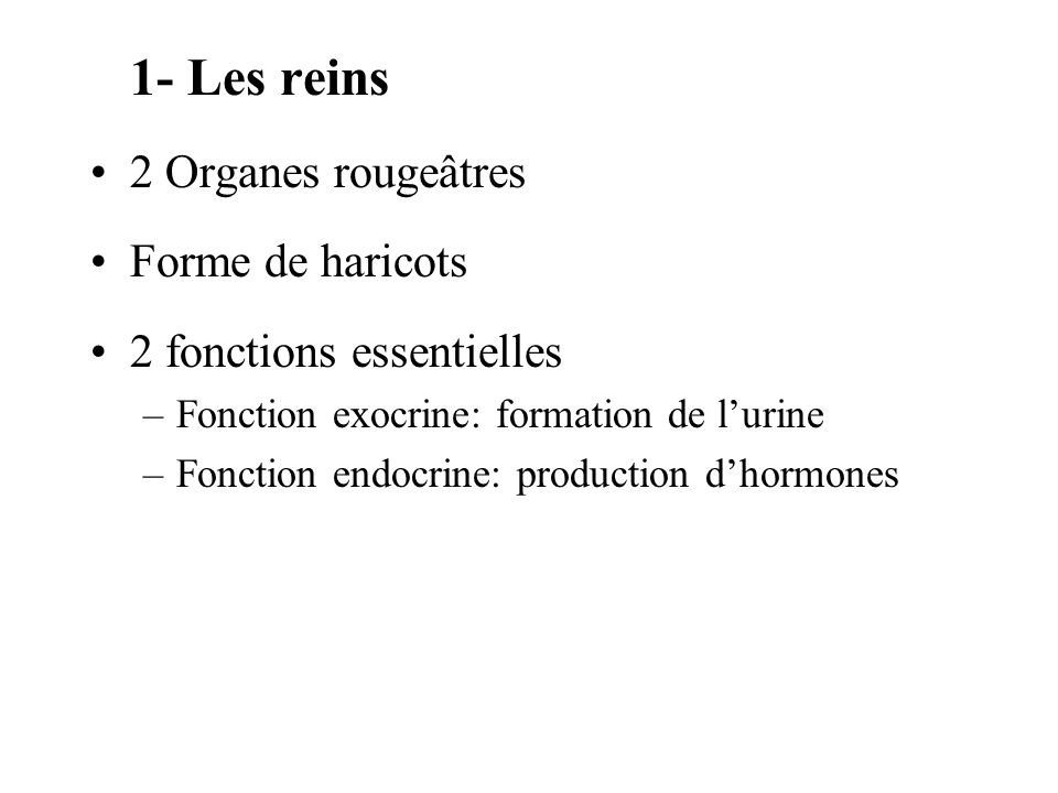 1- Les reins 2 Organes rougeâtres Forme de haricots 2 fonctions essentielles –Fonction exocrine: formation de lurine –Fonction endocrine: production dhormones