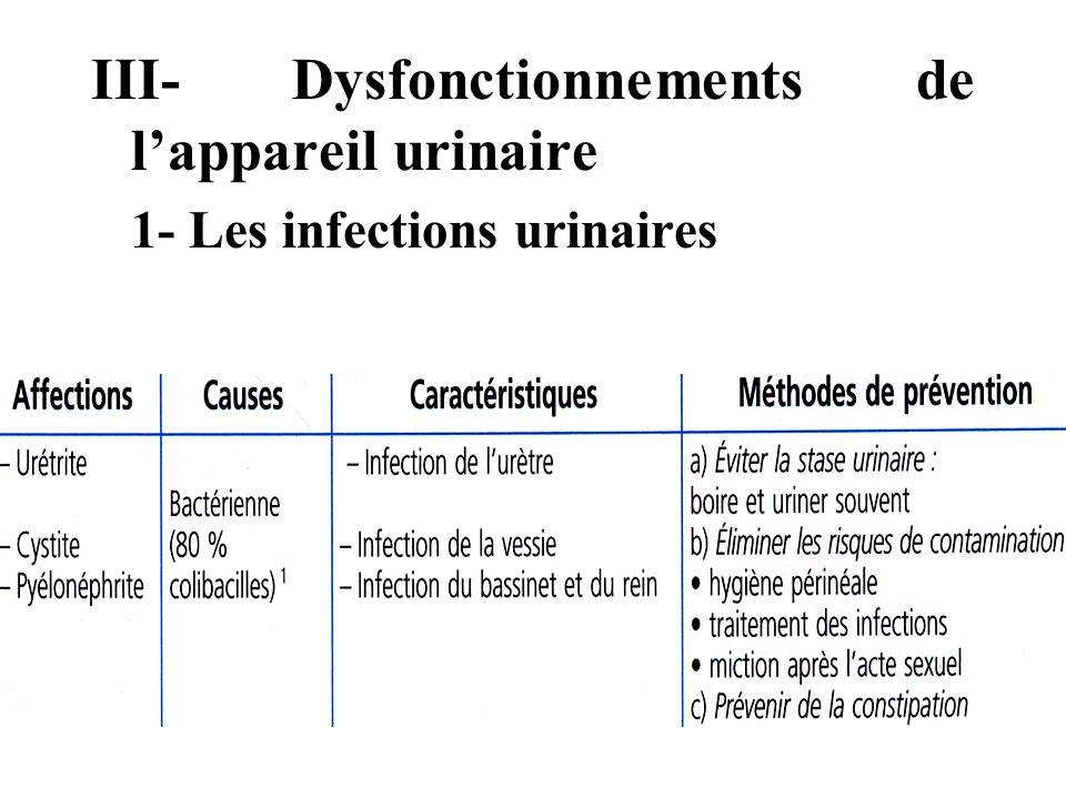 III- Dysfonctionnements de lappareil urinaire 1- Les infections urinaires