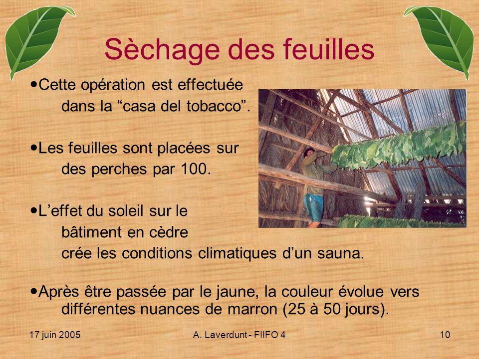 17 juin 2005A. Laverdunt - FIIFO 410 Cette opération est effectuée dans la casa del tobacco. Les feuilles sont placées sur des perches par 100. Leffet