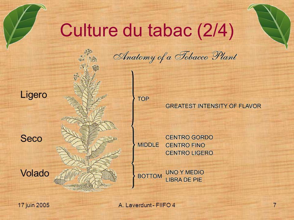 17 juin 2005A. Laverdunt - FIIFO 47 Culture du tabac (2/4) Ligero Seco Volado