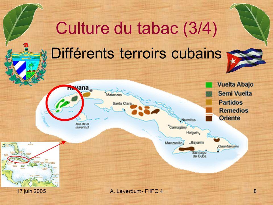 17 juin 2005A. Laverdunt - FIIFO 48 Différents terroirs cubains Culture du tabac (3/4)