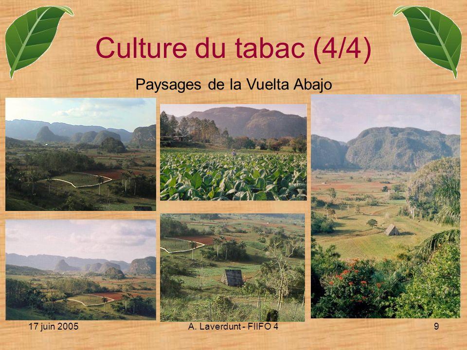 17 juin 2005A. Laverdunt - FIIFO 49 Culture du tabac (4/4) Paysages de la Vuelta Abajo