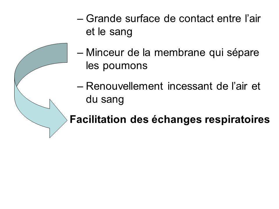 –Grande surface de contact entre lair et le sang –Minceur de la membrane qui sépare les poumons –Renouvellement incessant de lair et du sang Facilitat