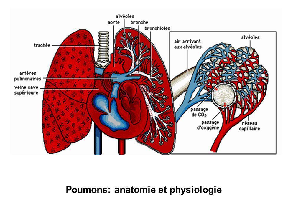 Poumons: anatomie et physiologie