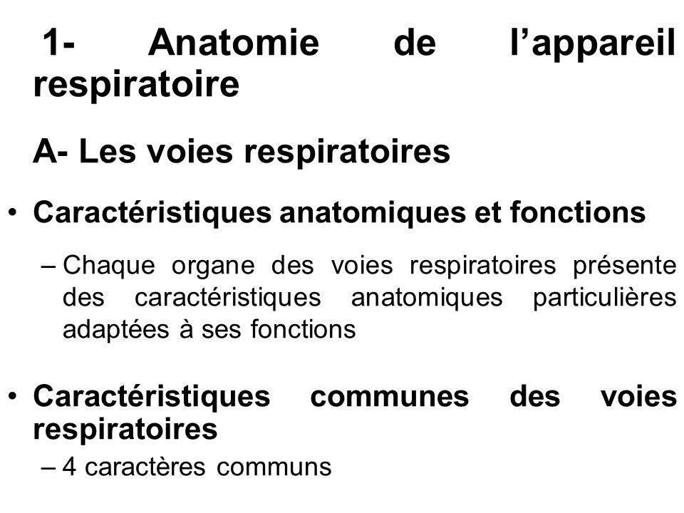 1- Anatomie de lappareil respiratoire A- Les voies respiratoires Caractéristiques anatomiques et fonctions –Chaque organe des voies respiratoires prés