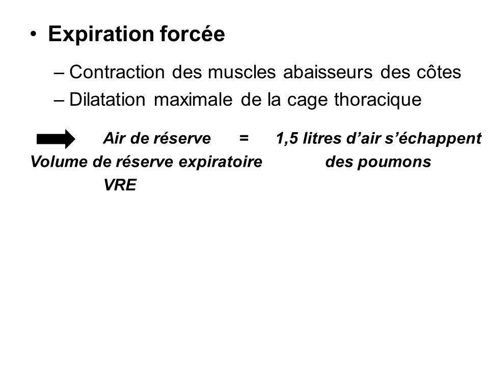 Expiration forcée –Contraction des muscles abaisseurs des côtes –Dilatation maximale de la cage thoracique Air de réserve = 1,5 litres dair séchappent