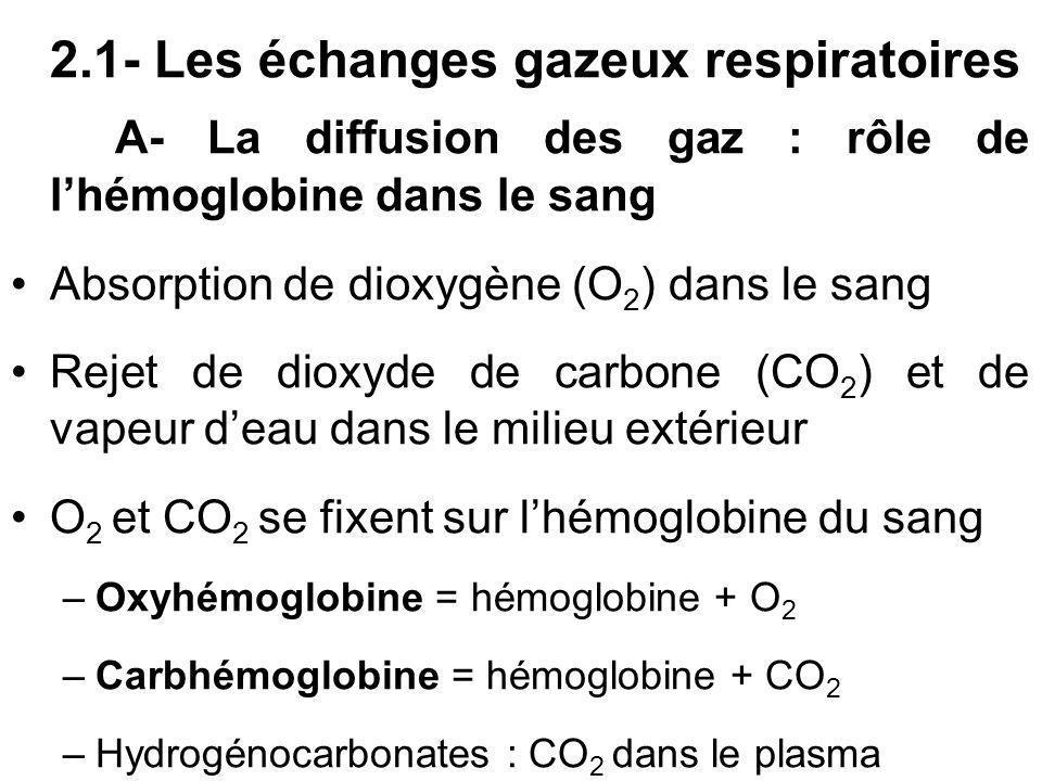 2.1- Les échanges gazeux respiratoires A- La diffusion des gaz : rôle de lhémoglobine dans le sang Absorption de dioxygène (O 2 ) dans le sang Rejet d