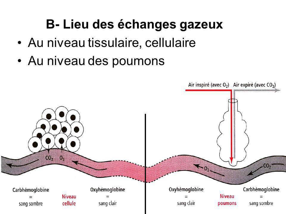 B- Lieu des échanges gazeux Au niveau tissulaire, cellulaire Au niveau des poumons