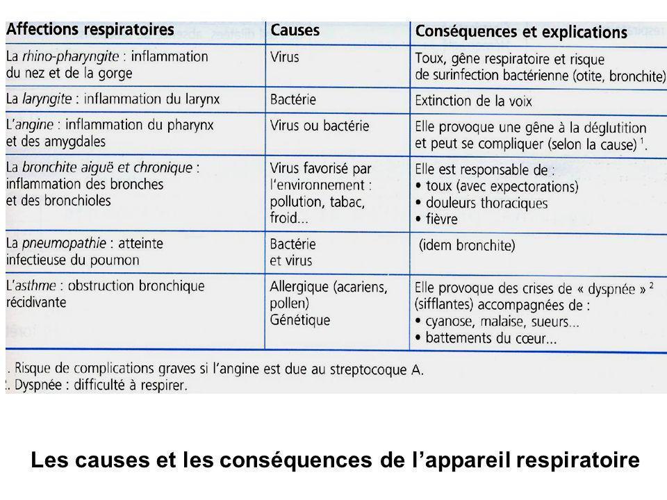 Les causes et les conséquences de lappareil respiratoire