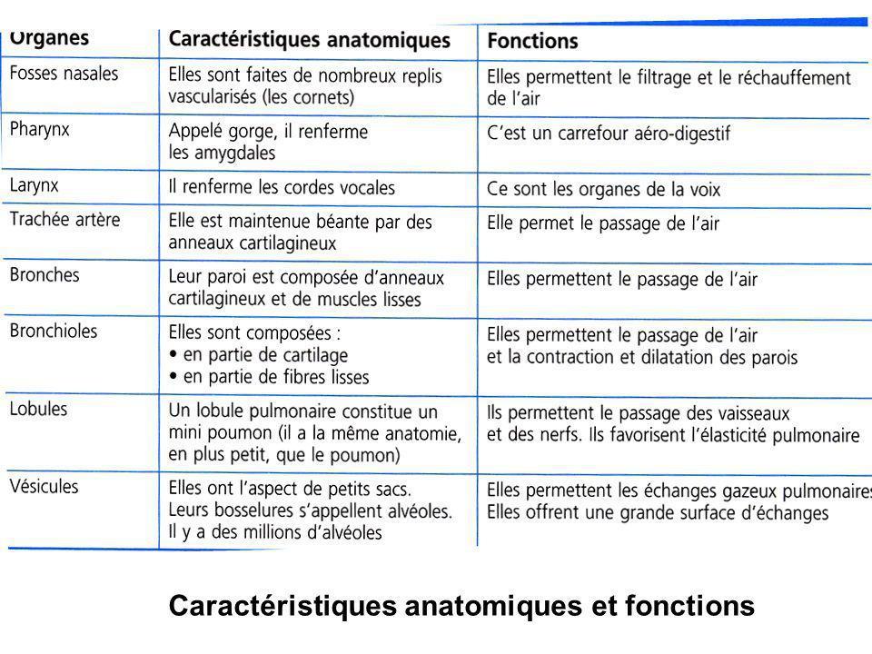 Caractéristiques anatomiques et fonctions