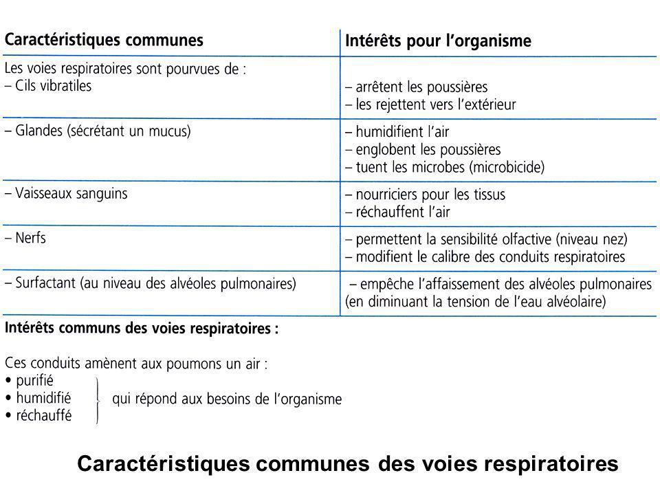 Caractéristiques communes des voies respiratoires