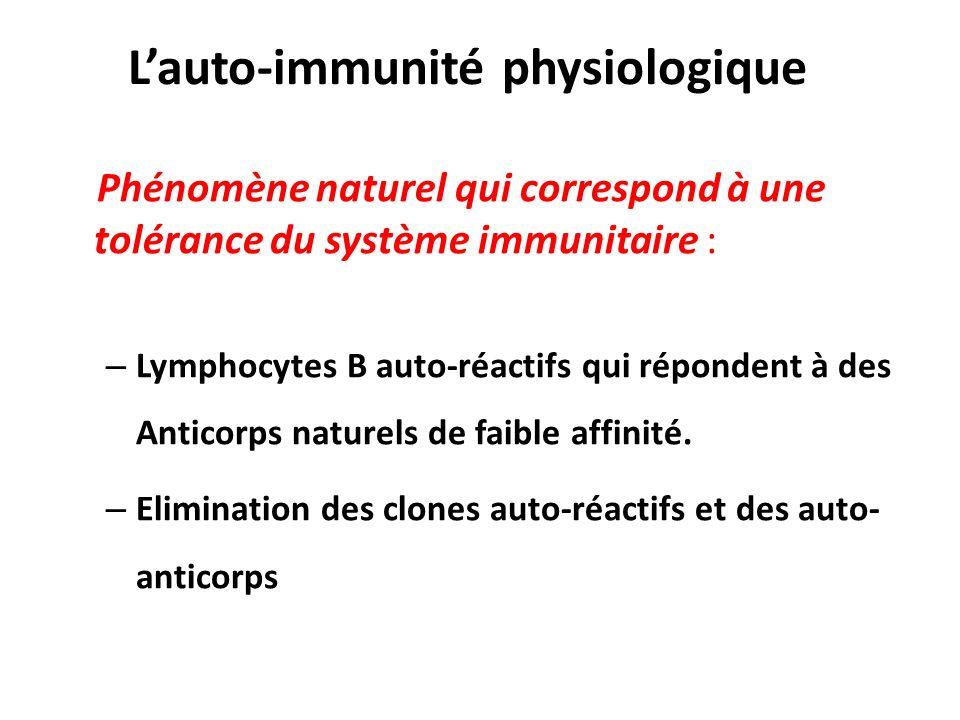 Lauto-immunité physiologique Phénomène naturel qui correspond à une tolérance du système immunitaire : – Lymphocytes B auto-réactifs qui répondent à d