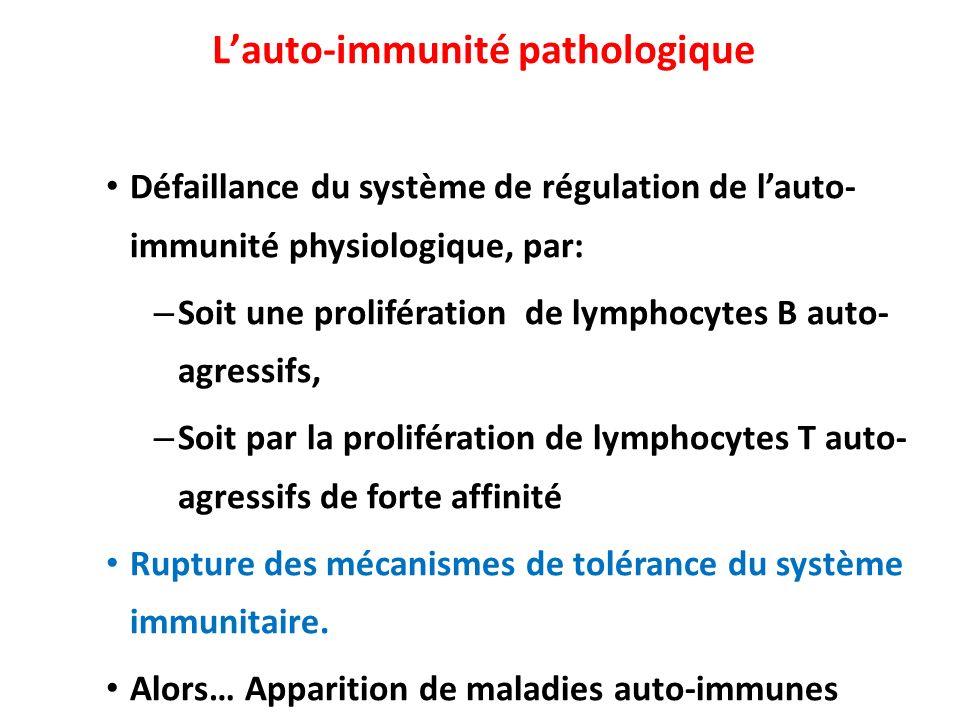 Lauto-immunité pathologique Défaillance du système de régulation de lauto- immunité physiologique, par: – Soit une prolifération de lymphocytes B auto