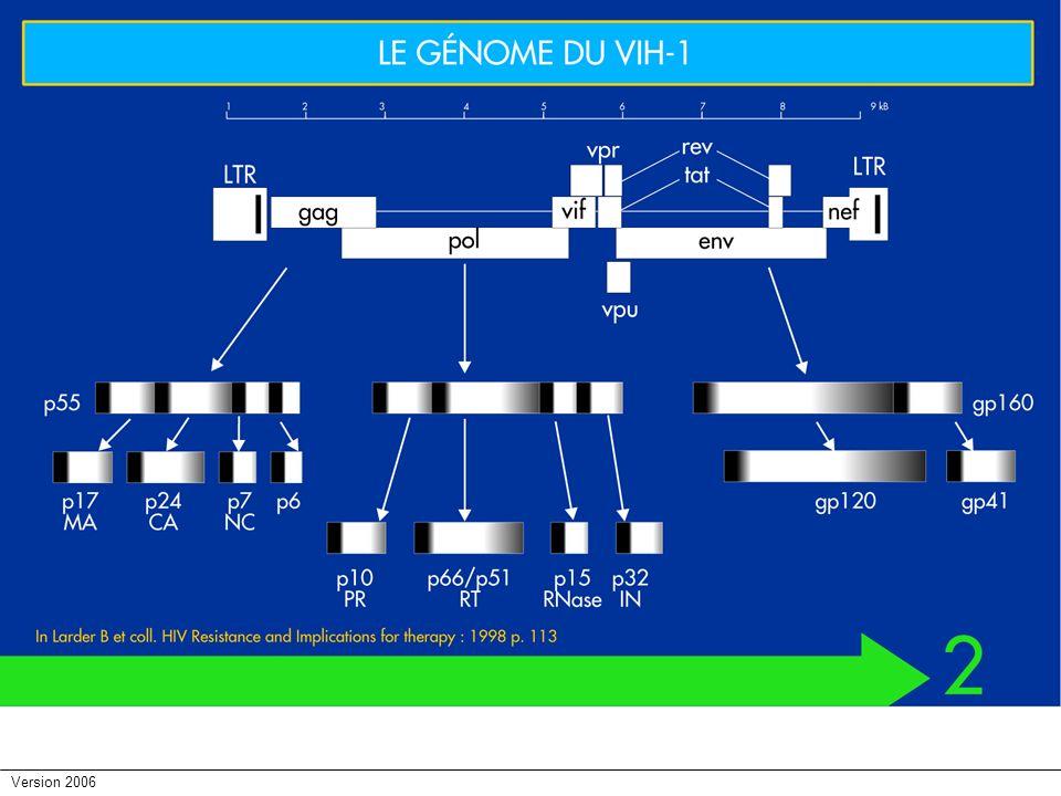 Version 2006 Histoire naturelle: Evolution de charge virale et des taux de TCD4+ au cours des différents schémas de progression vers le stade SIDA Ag p 24 3 mois10 ans Symptômes 10 2 10 4 10 6 10 8 Progresseurs rapides Progresseurs intermédiaires Non progresseurs à long terme ARNémie VIH (Copies/ml) T CD4+ (/mm3) 200 400 Contage 600 Holterman L et al., AIDS Review,2000;2:155-7 Progresseurs rapides Intermédiaires Non progresseurs à long terme Contage