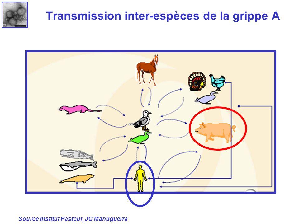 Transmission inter-espèces de la grippe A Source Institut Pasteur, JC Manuguerra