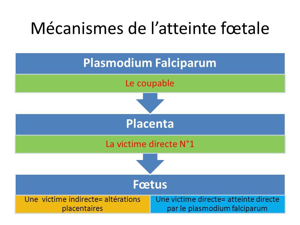 Mécanismes de latteinte fœtale Fœtus Une victime indirecte= altérations placentaires Une victime directe= atteinte directe par le plasmodium falciparu
